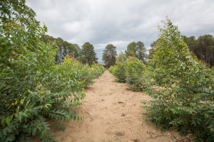 Forestry Development Trust Demonstration Plot