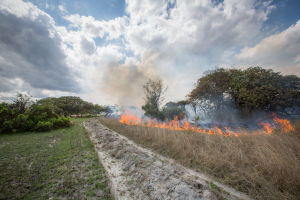 Fire preparation in Tanzanian forestry sector