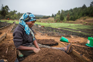 Worker at commercial tree nursery in Tanzania